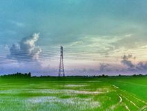 beautiful view of paddy field on one evening stock photos