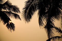 Beautiful view of palm at sunset Royalty Free Stock Image