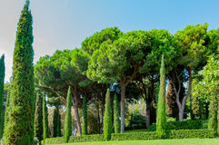 Beautiful view of the park with bright greenery. Beautiful view of the mediterranian park with bright greenery Stock Image