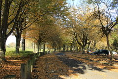 Beautiful view of a park in fall. I took this photograph in a public park near Vancouver lake at Vancouver Washington royalty free stock images