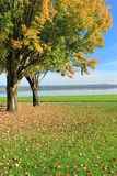 Beautiful view of a park. I took this photograph in a public park near Vancouver lake at Vancouver Washington stock photo