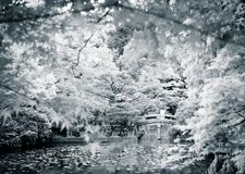 Dramatic scene in a park of Kyoto. Japan. Beautiful view in a park in Kyoto Japan, cherry trees and other trees rest over the water of the pond. A pensive man stock image