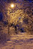 Beautiful view of the path through the forest in winter in the snow royalty free stock image