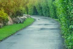 Beautiful view pathway or walkway in public park surrounded with green natural and sunlight background. Royalty Free Stock Images