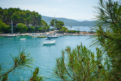 Beautiful view through the pine trees on the Mediterranean sea. Close up Royalty Free Stock Photos