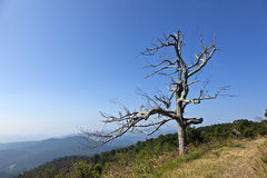 Beautiful view of the popular Blue Ridge  Mountain Stock Photos
