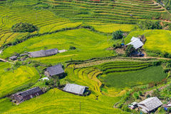 Beautiful view, Rice field terraces at Sapa, Vietnam Royalty Free Stock Image