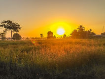 Beautiful view of rice paddy field during sunrise, cloudy and bl Royalty Free Stock Photo