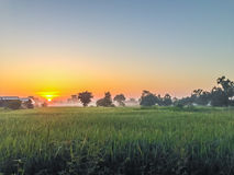 Beautiful view of rice paddy field during sunrise, cloudy and bl Royalty Free Stock Photography