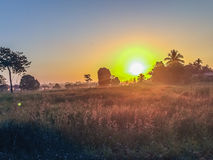 Beautiful view of rice paddy field during sunrise, cloudy and bl Stock Image