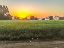 Beautiful view of rice paddy field during sunrise, cloudy and bl Stock Photo