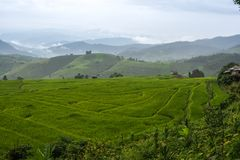 View of rice terraces in the morning at Bong Piang forest in Chiang Mai, Thailand. Beautiful view of rice terraces in the morning at Bong Piang forest in Chiang Stock Images