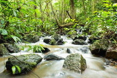 Beautiful view on the river. In brook at Northern of Thailand Stock Photos