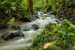 Beautiful view on the river. In forest at Northern of Thailand Stock Photography