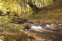 Beautiful view of a river in the forest, Strandzha mountain, Bulgaria. Autumn forest Stock Images