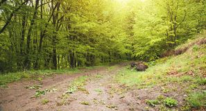 Beautiful view. The road in the spring forest royalty free stock images