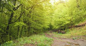 Beautiful view. The road in the spring forest stock images