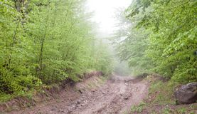 Beautiful view. The road in the spring forest royalty free stock photos