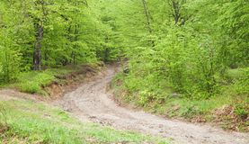 Beautiful view. The road in the spring forest royalty free stock photography