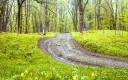 Beautiful view. The road in the spring forest stock image