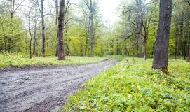 Beautiful view. The road in the spring forest stock photography