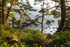 Beautiful view of a rocky Japanese sea lagoon through trees Royalty Free Stock Image