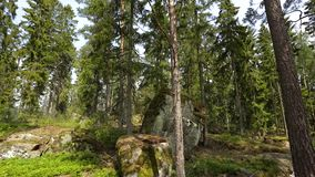 Beautiful view of rocky nature landscape in forest. High green pine trees on blue sky background. Amazing nature landscape background. Sweden, Europe stock video footage