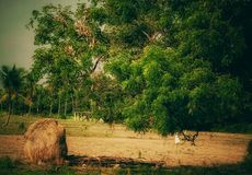 A beautiful view of rural India royalty free stock photo