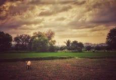 Beautiful view of rural India royalty free stock photos