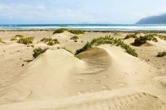 Beautiful view of sand dunes with green vegetation and Atlantic Ocean on the background, Lanzarote, Spain royalty free stock photography