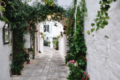 Beautiful view of scenic narrow alley with plants, Ostuni, Apulia, Italy Royalty Free Stock Image