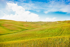 Beautiful view of scenic Tuscany landscape in Val d'Orcia, Italy Royalty Free Stock Photo