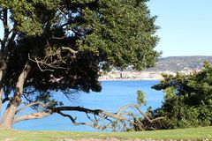 Beautiful view of sea from inside the tree. Beautiful blue sea view from inside the tree Royalty Free Stock Photography