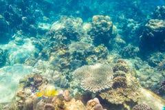 Beautiful view of sea life royalty free stock photo