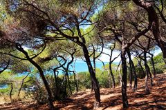 Piombino, Salivoli, Livorno, beautiful forest and tyrrhenian sea Stock Photography