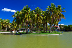 Island With Palm Trees Royalty Free Stock Image