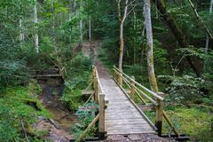 Beautiful view of a small wooden bridge over a stream in the forest in Gauja National Park in Latvia stock photos