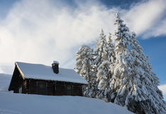 Beautiful view of the snow-covered spruces near wooden house in winter Royalty Free Stock Photo