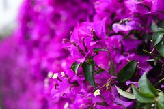 Purple Flowers. A beautiful view of some purple flowers Royalty Free Stock Image
