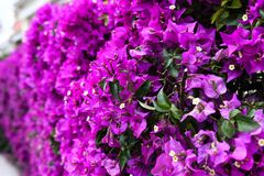 Purple Flowers. A beautiful view of some purple flowers Stock Image