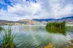 Beautiful view of some typical plants in the beautiful lake in Yahuarcocha , with a gorgeous cloudy day with the. Mountain behind in Ecuador Stock Image