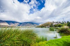 Beautiful view of some typical plants in the beautiful lake in Yahuarcocha , with a gorgeous cloudy day with the. Mountain behind in Ecuador Royalty Free Stock Photos