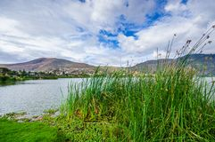 Beautiful view of some typical plants in the beautiful lake in Yahuarcocha , with a gorgeous cloudy day with the. Mountain behind in Ecuador Stock Photography