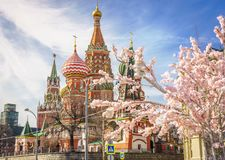 Beautiful view of St. Basil`s Cathedral. The bloom of Sakura in Moscow. spring season. Russia, the Kremlin Moscow spring royalty free stock photo