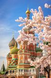 Beautiful view of St. Basil`s Cathedral. The bloom of Sakura in Moscow. spring season. Russia, the Kremlin Moscow spring stock photos