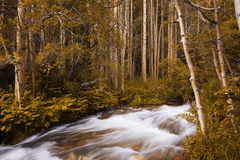 Beautiful view of a stream in the Rocky Mountains National Park, in the State of Colorado Stock Photo