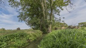 Beautiful view of a stream with a tree and green vegetation. In of the Itteren recreational pond in South Limburg in the Netherlands Holland royalty free stock images