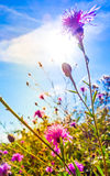 Beautiful view in summer flower Royalty Free Stock Photos