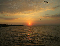 Beautiful View of Sun Rising over the Gulf of Thailand with Uncountable Seagulls Stock Photos