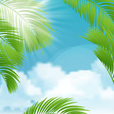 Beautiful view on sunny day with palm leaves. Stock Photo